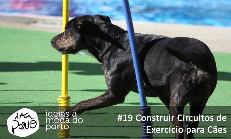 #19 Construir circuitos de exercício para cães